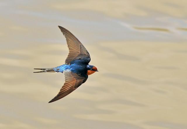 Welcome_Swallow_Wings.jpg