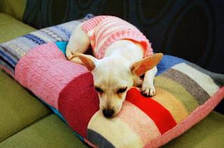 cuccia per cani con un vecchio maglione