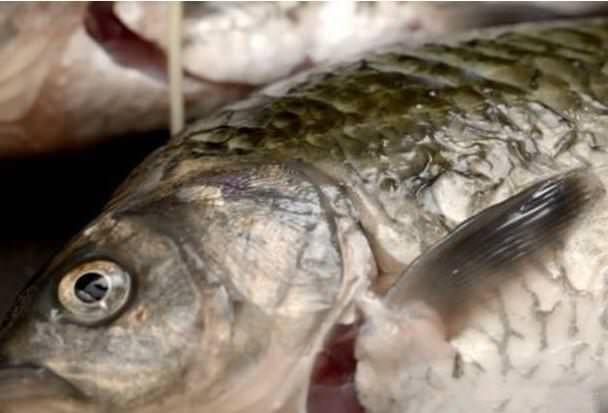 這才是燉魚的正確方法。湯特別白。好吃又新鮮。之前都做錯了···