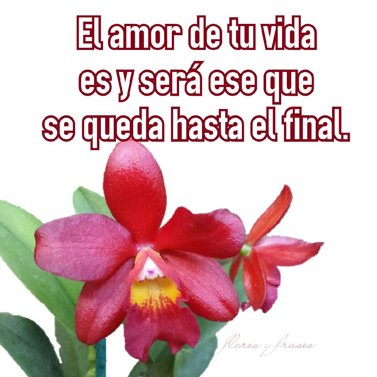 Flores Y Frases El Amor De Tu Vida