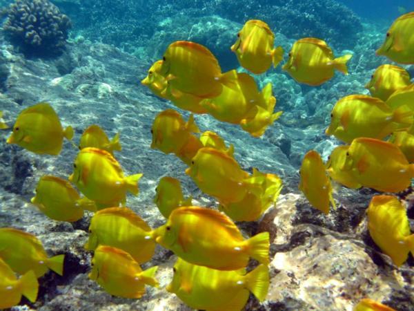 The Underwater Life