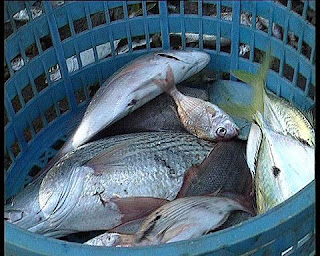 PPP scheme to mass produce fish takes off in Lagos 2