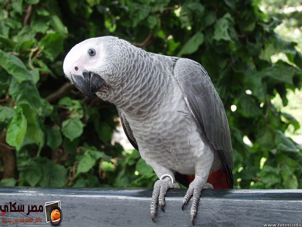 تعرف على أشهر أنواع الببغاوات بالصور والفديو Types of parrots