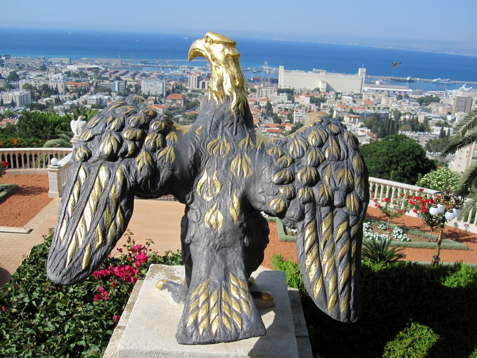 hawk of haifa