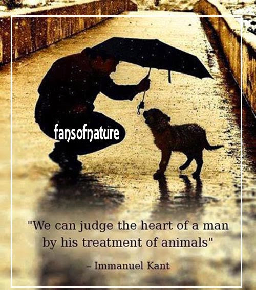"""we can judge the heart of a man by his treatments of animals"""