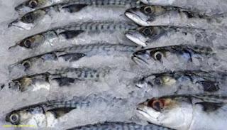 Pendinginan Ikan Dengan Es