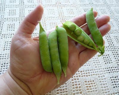 Harrison's Glory Peas