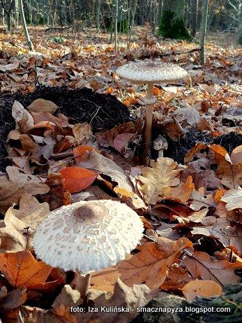 grzybobranie, na grzyby, grzyb, runo lesne, prosto z lasu, las, jesien