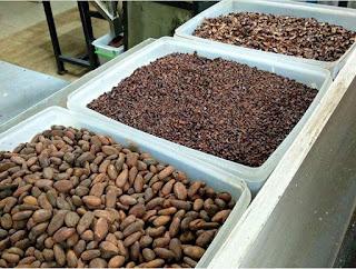 Apakah ditempat ini ada pelatihan untuk petani kakao dan pengolahan hasil akhirnya???. . . . . . .Kita siap siaga bagi siapa saja dan kapan saja untuk mengadakan pelatihan kopi maupun kakao langsung hubungi puslitkoka via surat kepada direktur.