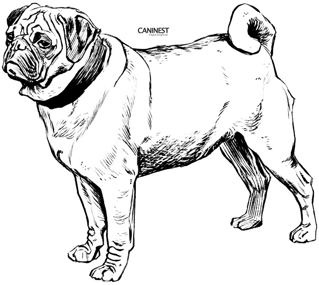 Pug Line Drawing For Coloring Pages Draw Puppy Coloring Pages
