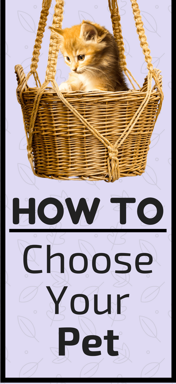 How To Choose The Style Of The: How To Choose Your Pet