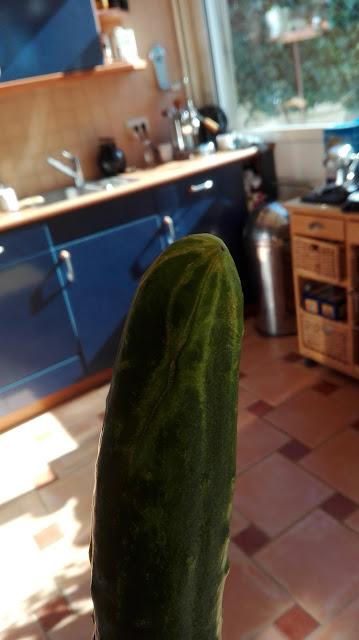 2016, Komkommer van mijn vriendin Emmy.