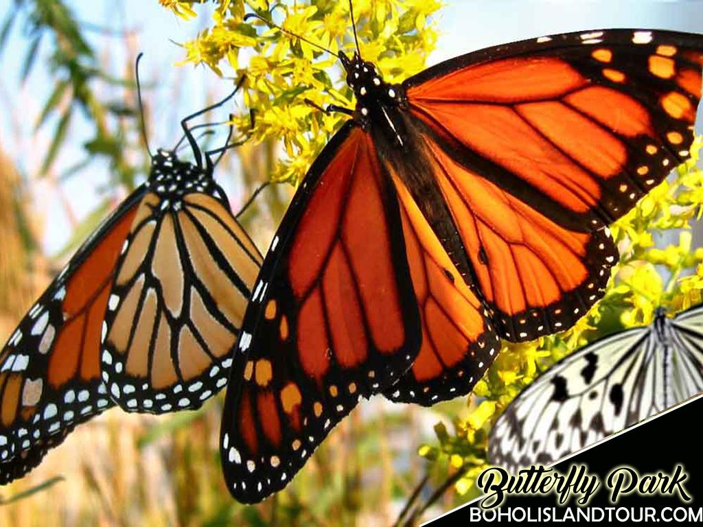 butterfly-garden-bohol