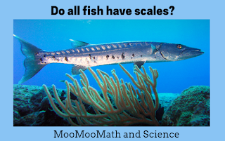 moomoomath and science daily science fact do all fish