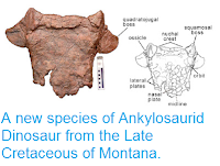 http://sciencythoughts.blogspot.co.uk/2013/07/a-new-species-of-ankylosaurid-dinosaur.html