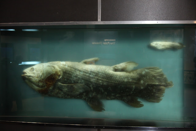 preserved-coelacanth-my-list-mag