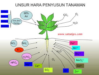 unsur hara makro dan mikro tanaman