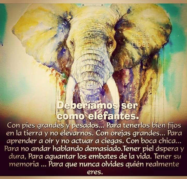 Deberíamos ser con los elefantes