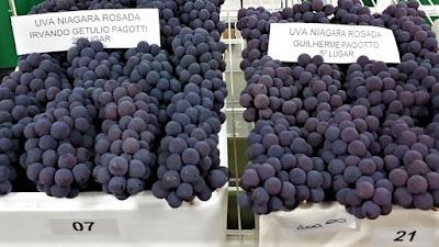 O cultivo da uva está relacionado com a imigração italiana que aportou na região no final do século 19.