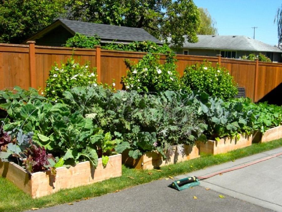 Tarım Siteniz: Sebze Bahçesi Hazırlama (Making the ...