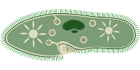 soal un biologi tentang protista