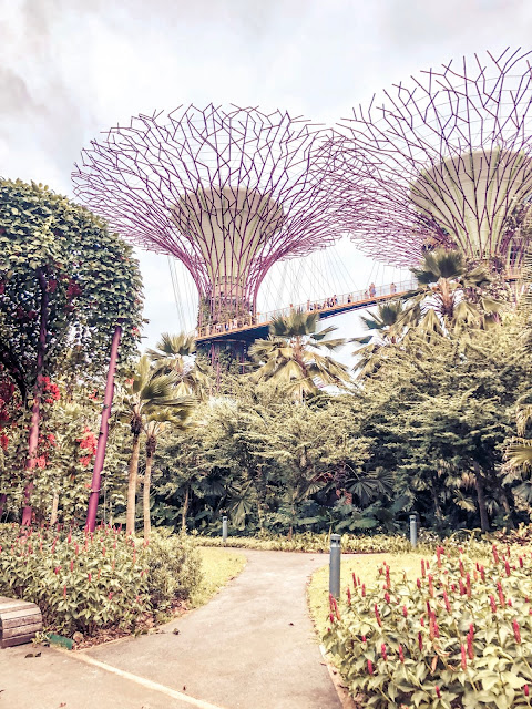 What home means to me: Singapore Gardens