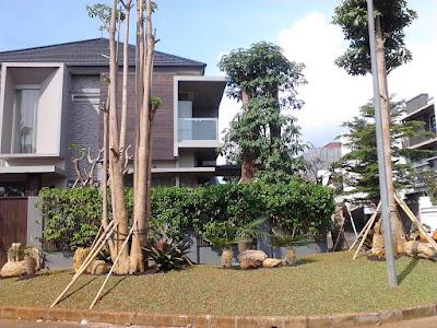 Tukang Taman Banjarmasin | www.tukangtamanbanjarmasin.com