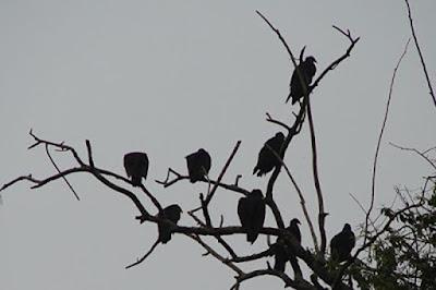 Vì sao chim ngủ trên cành cây không bị ngã