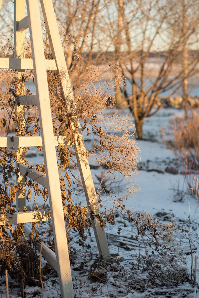Talvinen kärhö ja puutarha obeliski