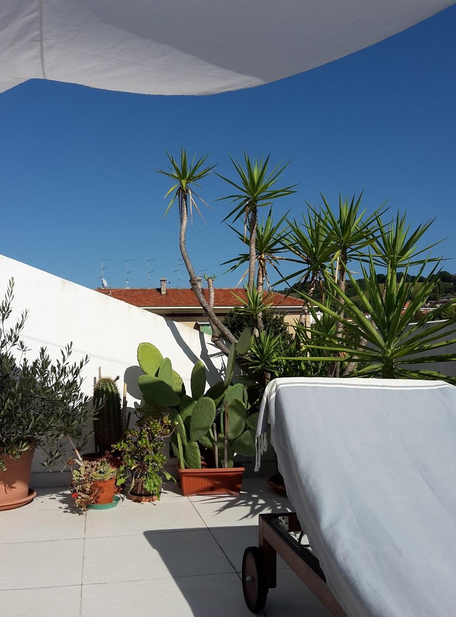 piante terrazza plants terrace