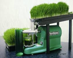 wheat grass in hindi