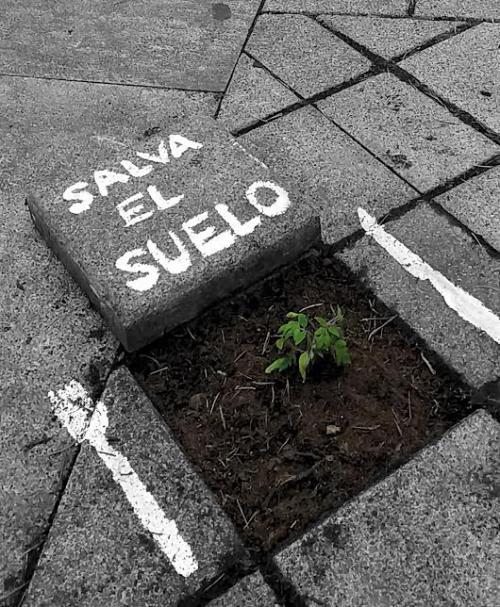El cuidado del suelo sostiene la vida