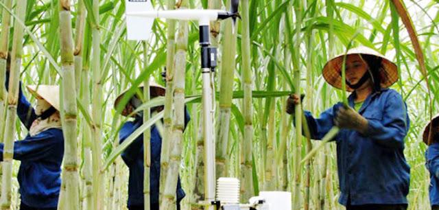 Việt Nam ứng dụng AI, IoT để tăng xuất khẩu nông sản, thủy sản