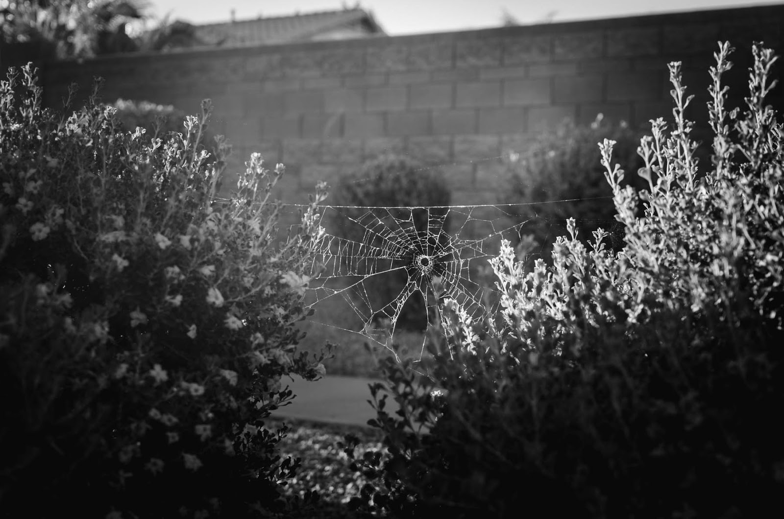 black and white web photos