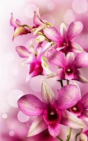 Lukisan Bunga Orkid Cikimm Com