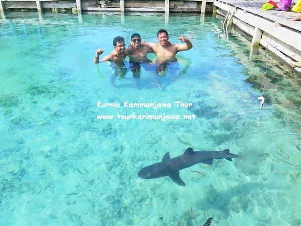 paket wisata karimunjawa november di kolam hiu