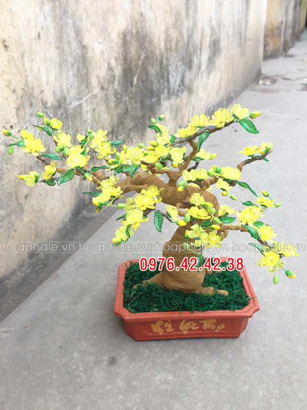 Goc bonsai cay hoa mai tai Tho Thap