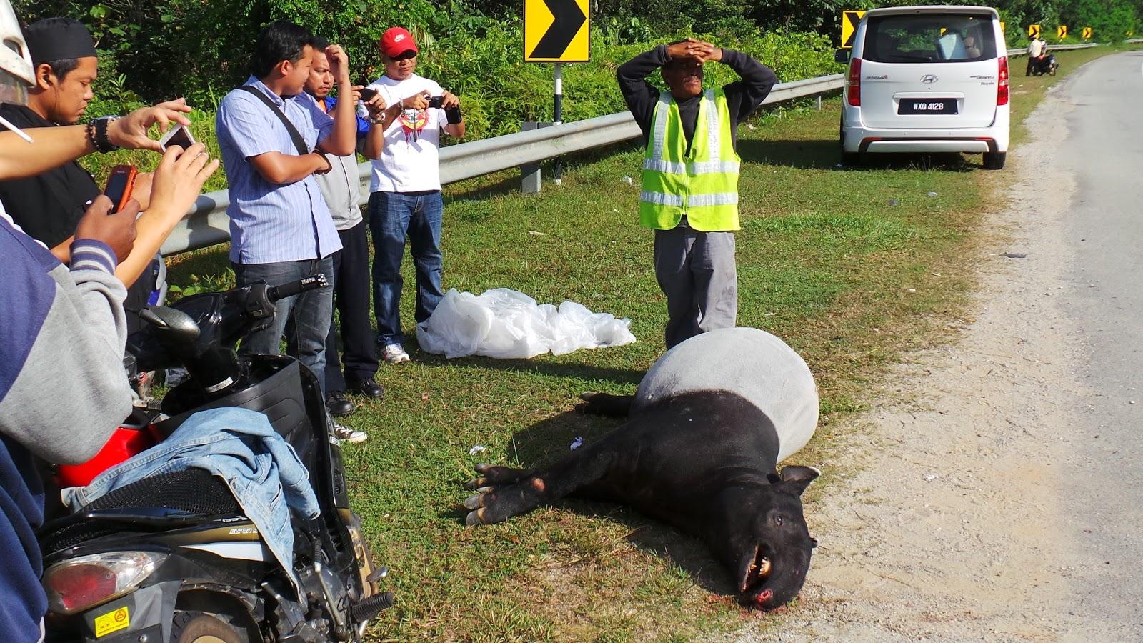 ivanildosantos gambar tapir