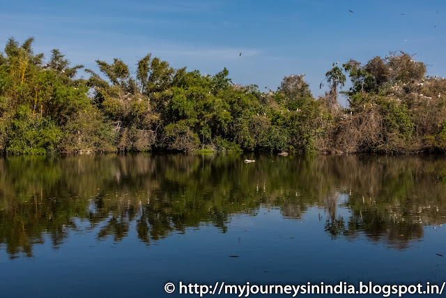 Ranganathittu Birds