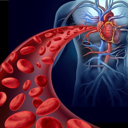 Améliorer la circulation sanguine