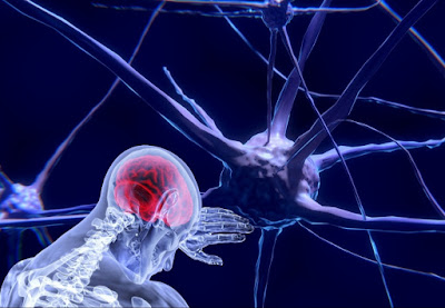 Contoh Soal Neurologi (Sistem Saraf Manusia)