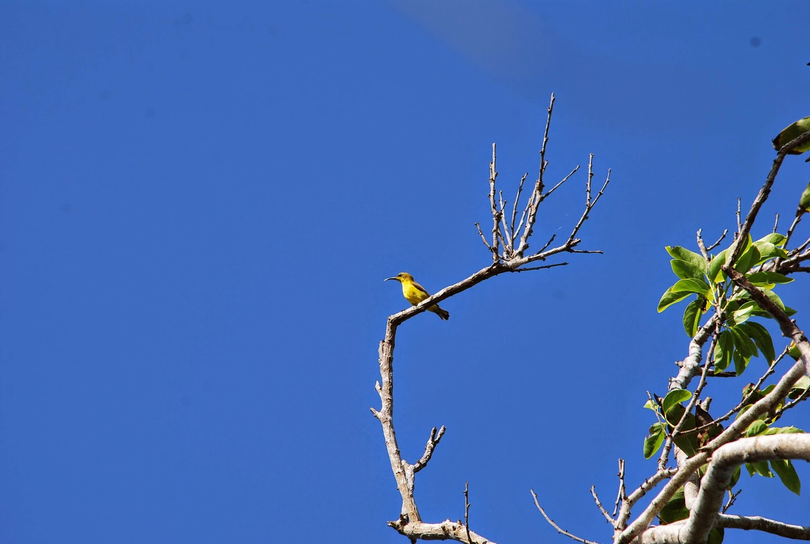 Manukan Island Birds