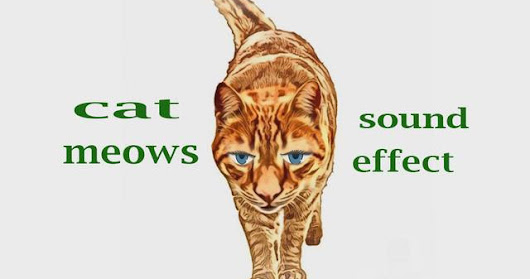 How A Cat Meows - Sound Effect - Animation