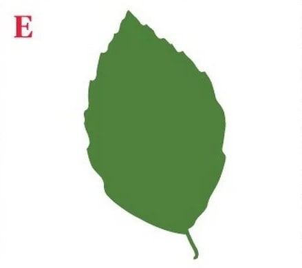 Choose A Leaf And Discover What Its Shape