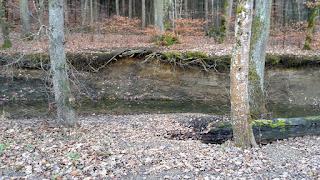 Erosion: Tiefes Bachbett im Wald