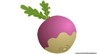 beet clipart royalty free
