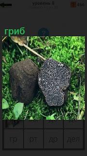 На траве растет гриб необычный формы и рядом лежит камень похожий