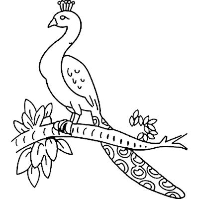 Gambar Mewarnai Burung Merak - 9