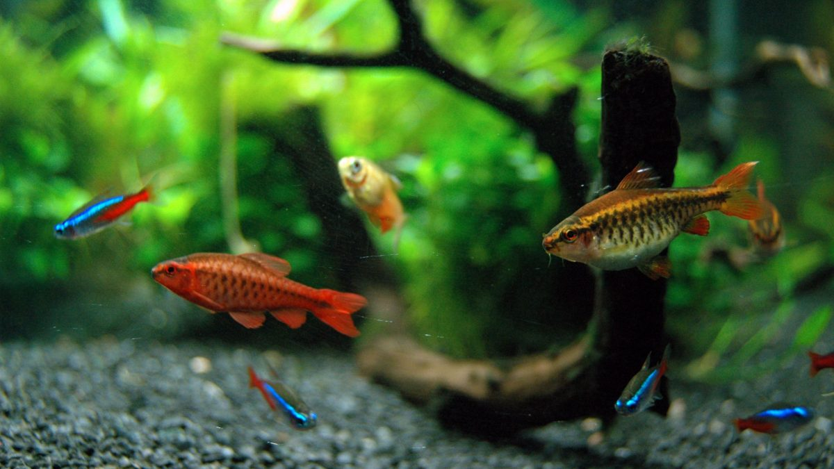 Best Pet Fish To