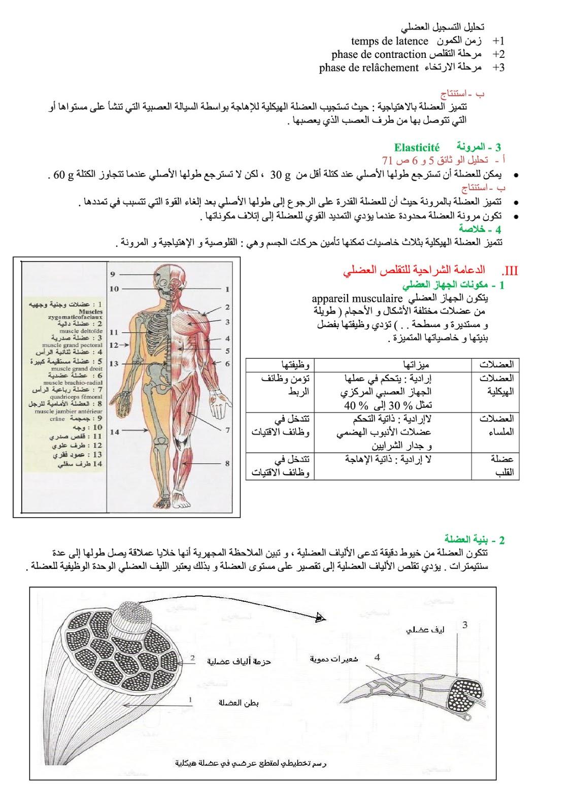 تلخيص درس الجهاز العضلي للسنة الثالثة إعدادي